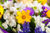 Spring flowers background — Stock Photo