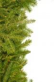 Pine branches border — Stock Photo