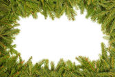 Pine branches border — Stock Photo