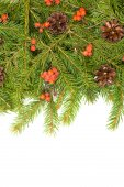 Christmas frame with pine branches — Stock Photo