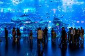 Largest world aquarium  in Dubai Mall — Stock Photo