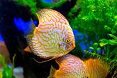 Aquarium with tropical fish — Stock Photo