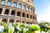 Colosseum and flowers in Rome — Stock Photo