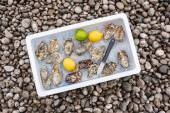 Fresh oysters on ice — Stock Photo