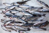 Fresh labrax or seabass on ice — Stock Photo