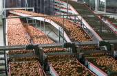 Eggs on a poultry factory — Stock Photo