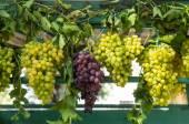 Fresh grape on a marker — Stock Photo