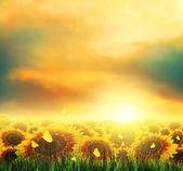 Summer, Field, Sky, Sun, Sunset, Grass, Sunflowers, Butterflies — Stock Photo
