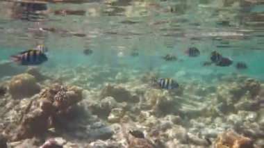 Reef with  corals and fish — Wideo stockowe