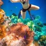 Постер, плакат: Snorkeler Maldives Indian Ocean coral reef