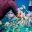 Tropical Coral Reef.Man feeds the tropical fish. — Stock Photo #71311057