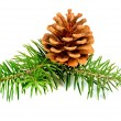 Fir branches with cones — Stock Photo #58755247