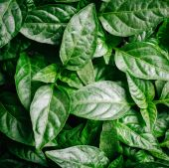 Green background leaf spring — Zdjęcie stockowe