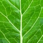 Macro background of green leaf lettuce — Stock Photo #83044476