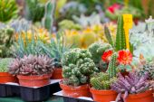 Various cactuses on a show-window — Stock Photo