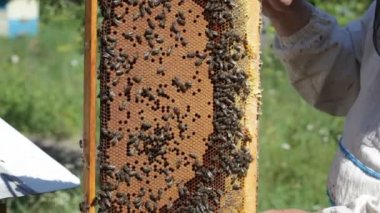 Bee-keeper holds honeycombs — Stock Video
