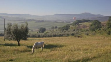 Horse is grazed on a meadow, Tuscany — Stock Video
