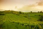 Tuscany vineyards — Stock Photo