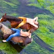Two friends on horses — Stock Photo #56539163