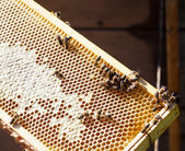 Frame with bee honeycombs — Stock Photo