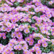 Small pink flowers — Stock Photo #57736167