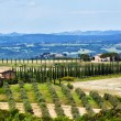 Typical Tuscan landscape — Stock Photo #57736311