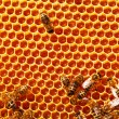 Working bees on honeycombs — Stock Photo #58799669