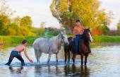 Men bathe horses in the river — Stock Photo