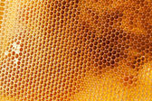 Bee honeycombs filled med — Stock Photo