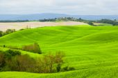 Green hills of Tuscany — Stock Photo