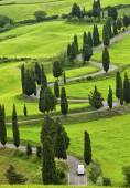 Twisting road and cypresses — Stock Photo