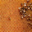Honeycombs filled with honey — Stock Photo #60530277