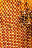Honeycombs filled with honey — Stock Photo