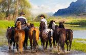 Cowboys on horses — Stock Photo