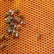 Honeycombs with honey and bees — Stock Photo #66300627