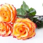 Three yellow roses — Stock Photo #69906331