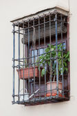 Barred window with houseplants — Stock Photo