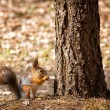 Squirrel sits under tree — Stock Photo #72048499
