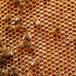 Bees sit on honeycombs — Stock Photo #72049015