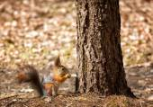 Squirrel sits under tree — Stock Photo