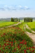 Tuscan summer landscape with cypresses — Stock Photo