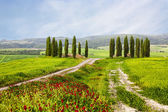 Italian summer landscape with cypresses — Stock Photo