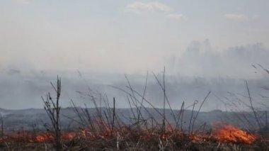Vypalování suché trávy — Stock video