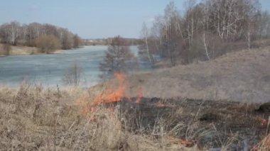 Spaluje suché trávy na břehu řeky — Stock video