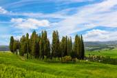 Tuscan landscape with the cypresses — Stock Photo