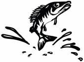 Fish ruff — Stock Vector