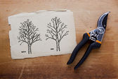 Tree pruning before and after — Stock Photo