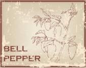 Bell pepper — Stock Vector