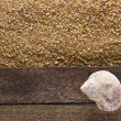 Ocean shell on a wooden board — Stock Photo #70489299