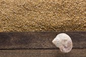 Ocean shell on a wooden board — Stock Photo